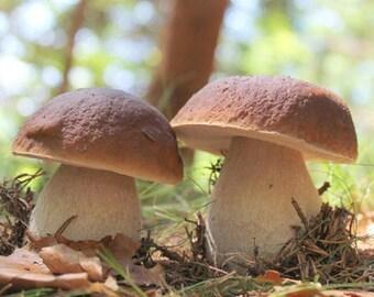 Mushroom spores | Etsy
