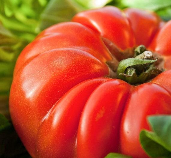 25 graines de Piment Oiseau Méthode BIO seeds plantes légumes jardin potager