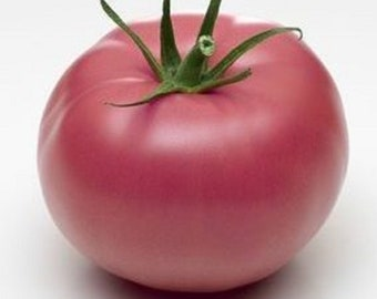 25 Seeds of Rose Tomato from Bern - Ancient vegetable garden - ORGANIC method
