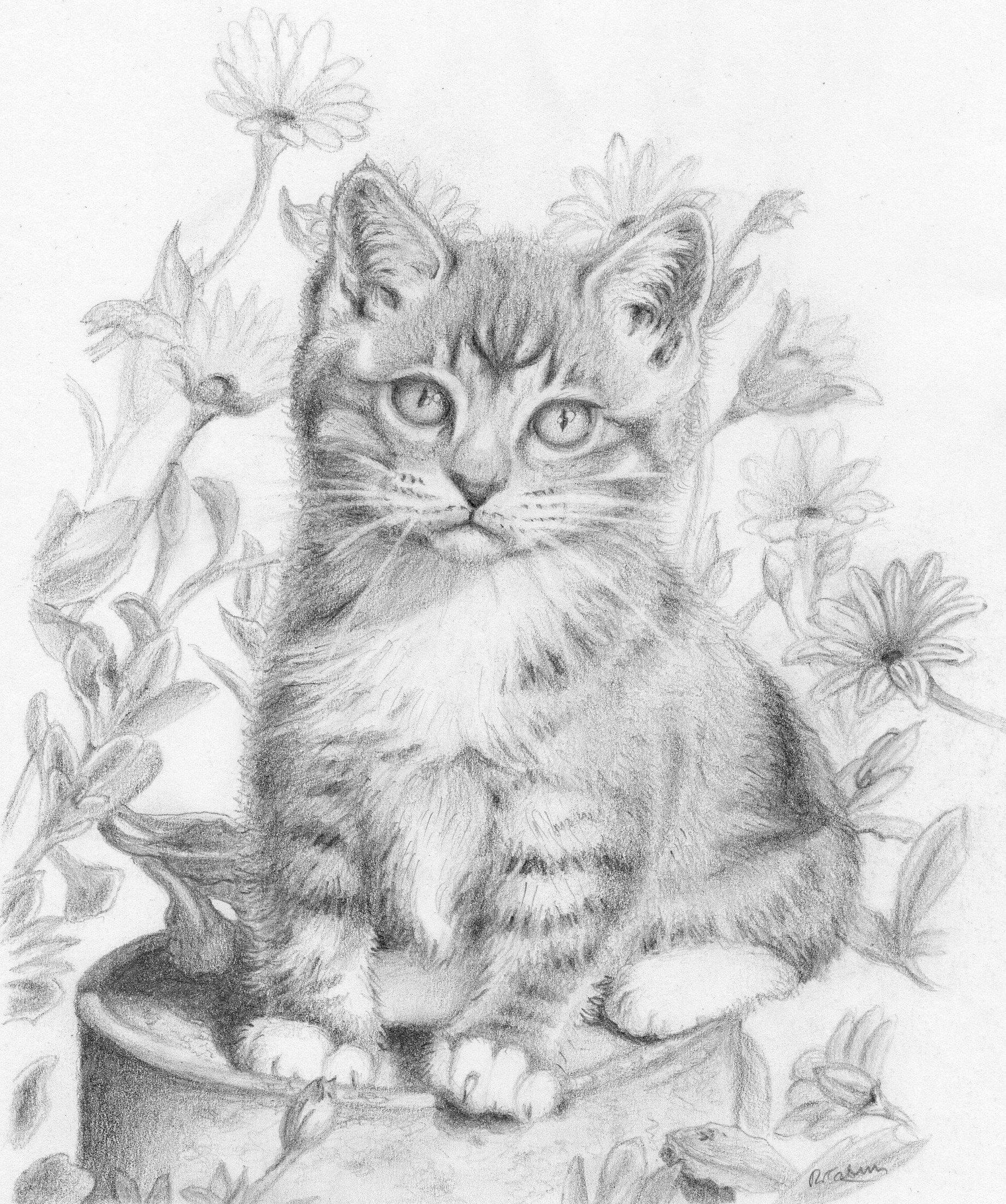 Kitten graphite pencil drawing blank greeting card