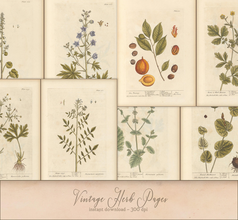 Vintage Botanical Herb Pages for Junk Journal, Scrapbooks, Grimoire, Paper  crafts, Printable Instant Download