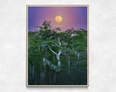 Full Moon Print, Z Tree Wall Art, Moon Photography, Everglades National Park