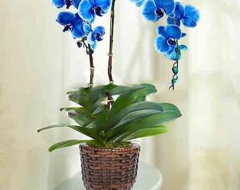 Terrarium orchidée | Etsy