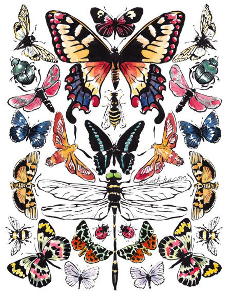 Bees butterflies beetles and dragonfly illustration poster image 0