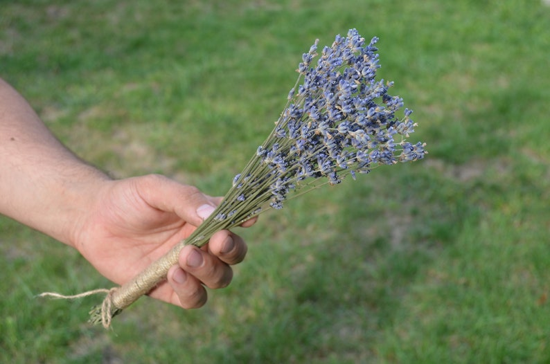Wedding Favors Lavender Bunch Dried Lavender Bundle,Dried Natural Provence Bunch Bridal Shower Ideas Dried Lavender Bunches  Mini Dried