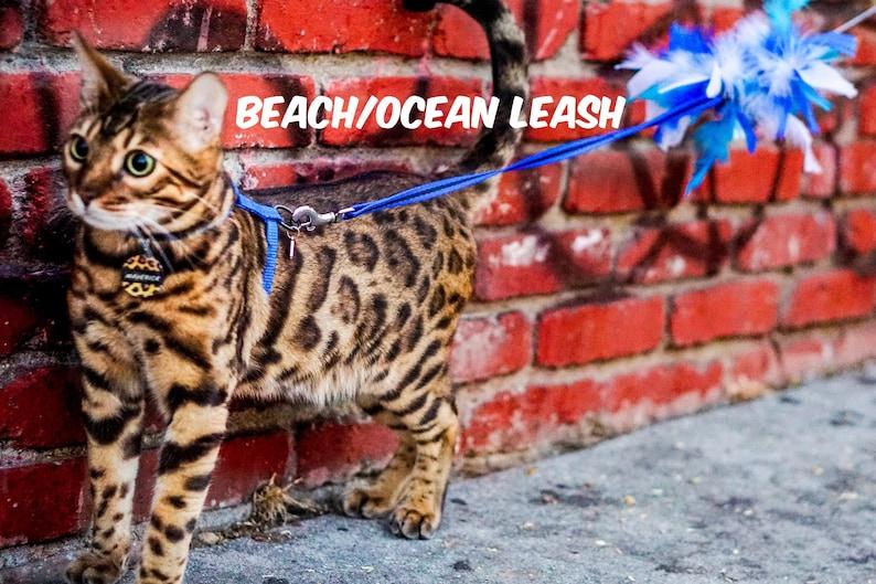 Rainbow Leash Limited Edition