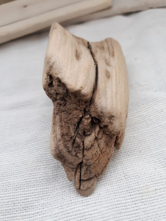 Medium Driftwood Piece with Great Textures and Details Freshwater Drift Wood Part of a root  519-11 Gnarly Interesting Small