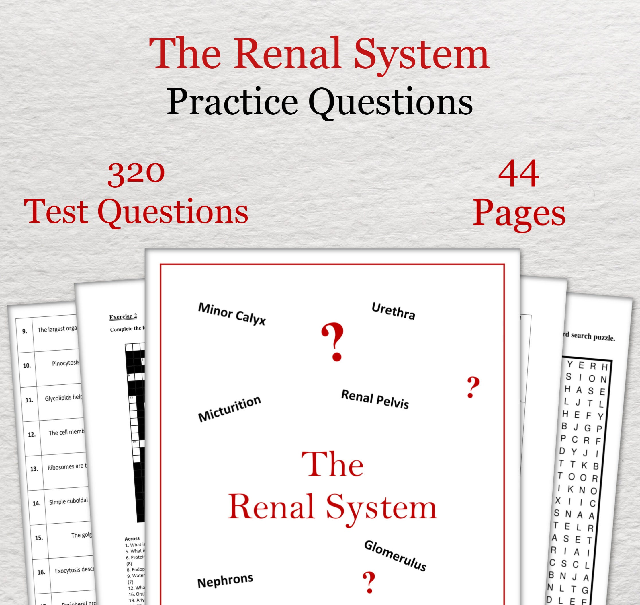 Renal System Practice Questions - Anatomy and Physiology Revision