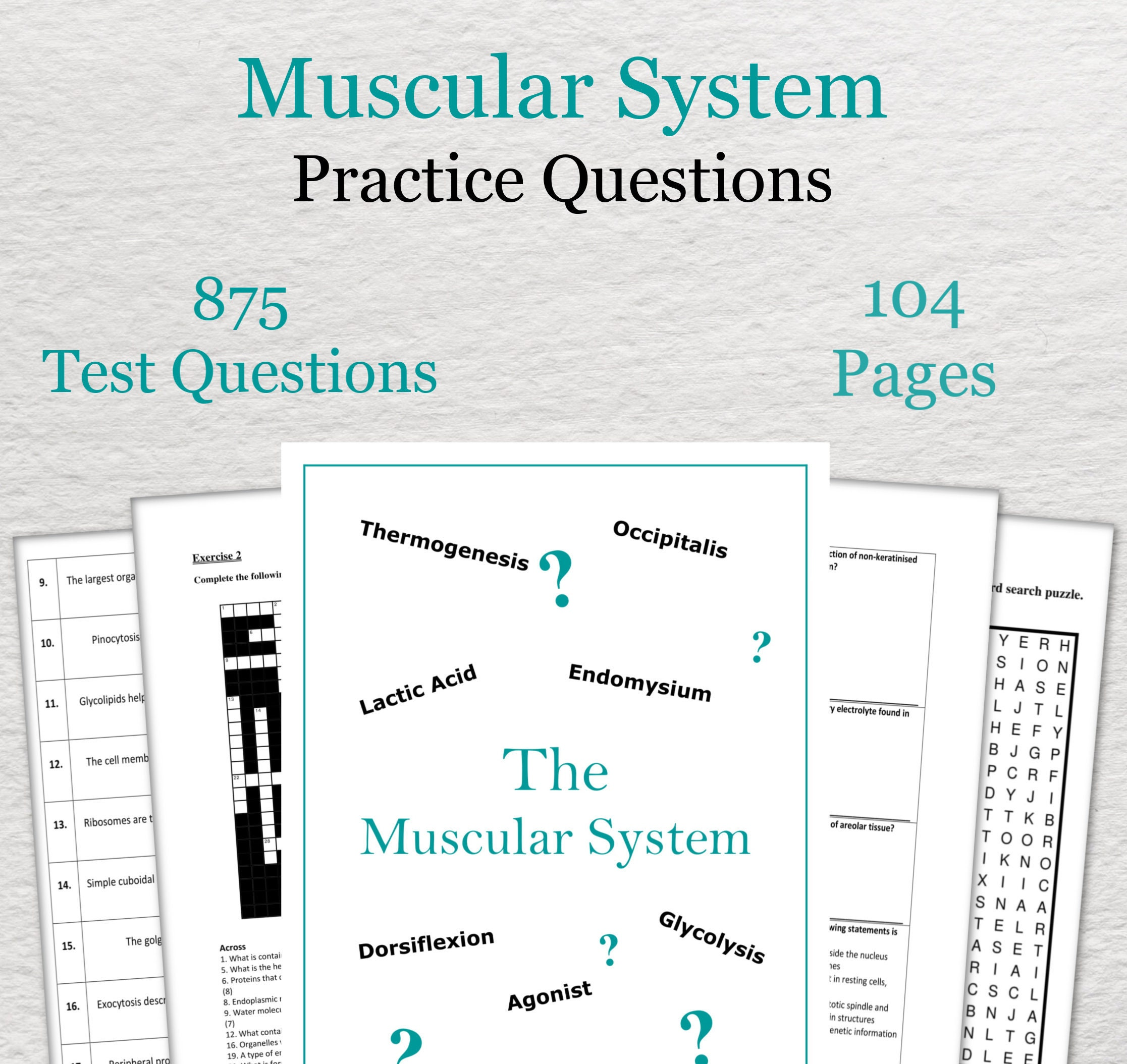 Muscular System Practice Questions - Anatomy and Physiology Revision
