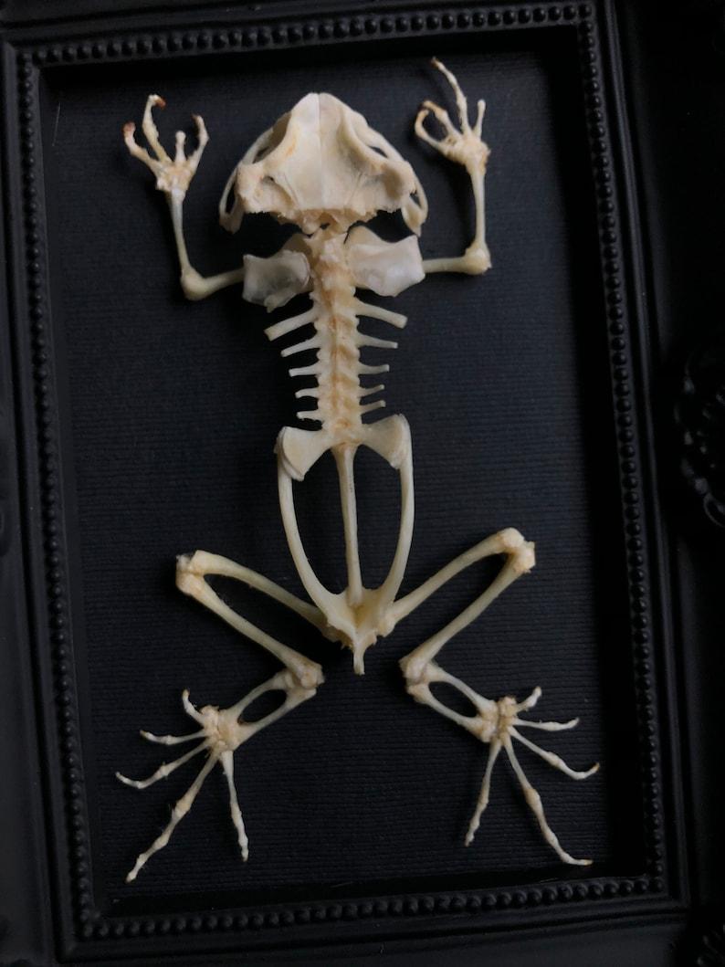 Bat Skeleton Goth Ornate