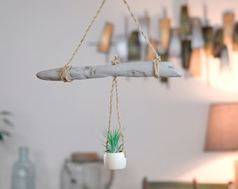 Driftwood deco suspension with Tillandsia
