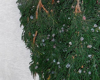 Preserved Juniper Cedar - Blueberry Juniper - Colorado Cedar - Holiday Decorating with Cedar