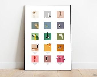 Bird Colour Chart , paint swatch style card, retro midcentury 1960s Illustration print/poster - bird poster - nature print