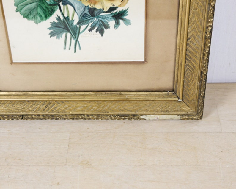 dated July 1870 19th C Botanical Watercolour in Period Frame signed