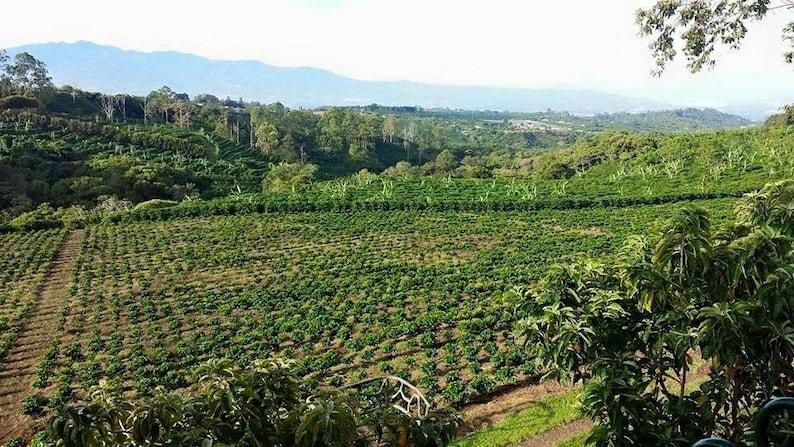 Costa Rica Coffee Farm Etsy
