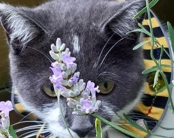 BIRD SAVER BELLS - Loud Bells Save Lives - Protect Your Cat - for bird saver collars