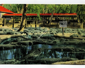 Alligator Farm Postcard