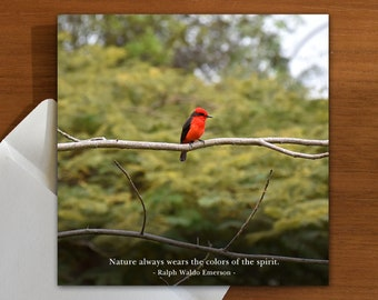 inspiration | nature | quote greeting card with red bird on branch