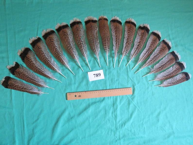 W-1 Long 16-20cm//Fiber 30-35mm 16 pcs Natural White Turkey Wing Feathers