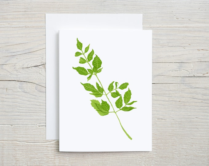 Chinaberry Leaves note card