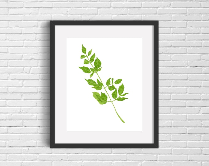 Chinaberry Leaves Print | Wall Art