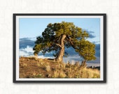 On Top Of The Hill,  Pine Tree Art Print,  Eastern Washington Photography,  Landscape Photography Trees, Lone Pine Photo