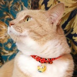 DARTH MAUL【COLLAR】Japanese kumihimo cat collar with safety magnet