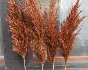PAMPAS GRASS/Terracotta Colored/1 (One) Stem/Dry Reeds/Dried Flowers/Dried Pampas Grass/Wedding Decor/Tall Vase/Centerpieces/Natural pampas