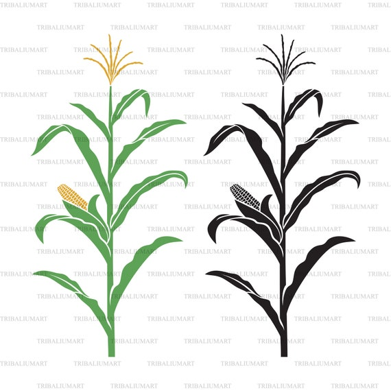 Corn Stalk Cut Files For Cricut Clip Art Silhouettes Eps Etsy Green leaves are affixed to the stem with several yellow ears developing above the leaves. corn stalk cut files for cricut clip art silhouettes eps svg pdf png dxf jpeg