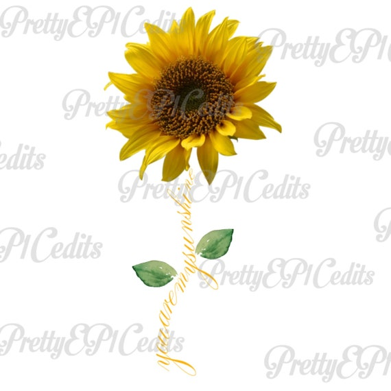 image regarding You Are My Sunshine Free Printable named Sunflower quotation, by yourself are my Sun, printable electronic graphic, wild and cost-free, PNG, JPG