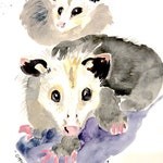 Two Possums Watercolor