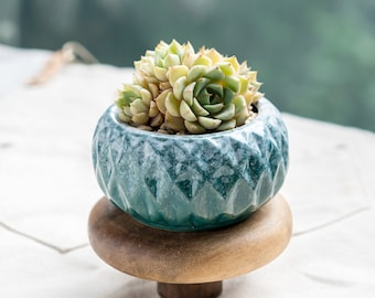 Rough Ceramic Succulent Pots Planters with Drainage Hole Bearie/'s Garden Wedding Gift  Indoor Decor  Tabletop Planter
