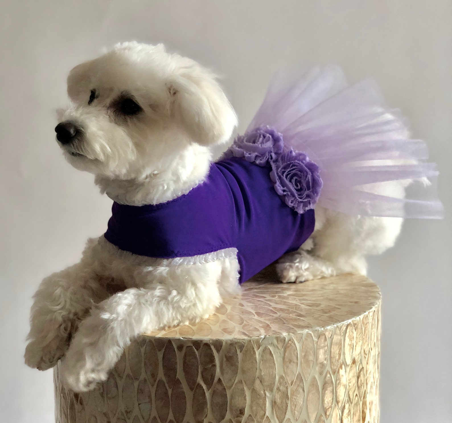 purple puppy ballet dress // upcycled pet outfit