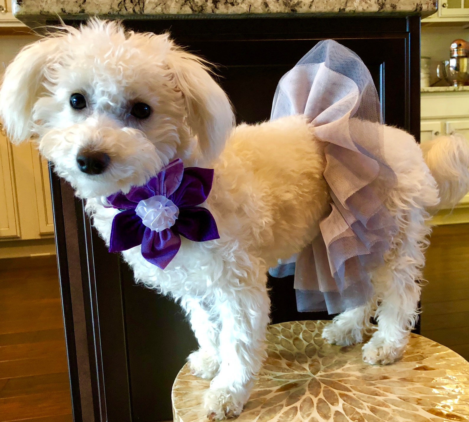 ethical pet ballet tutus with flower accent