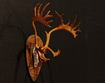 Barren Ground Caribou/Reindeer Bull (Half Skull) Miniature Mount Magnet