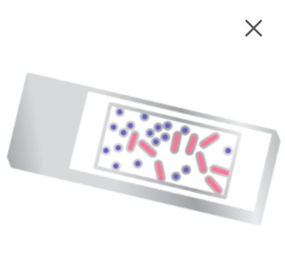 Blood Slide Microscope Enamel Pin  Hematology Pathology  Laboratory  Science STEM  Microbi