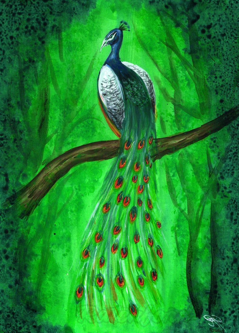 Peacock image 0