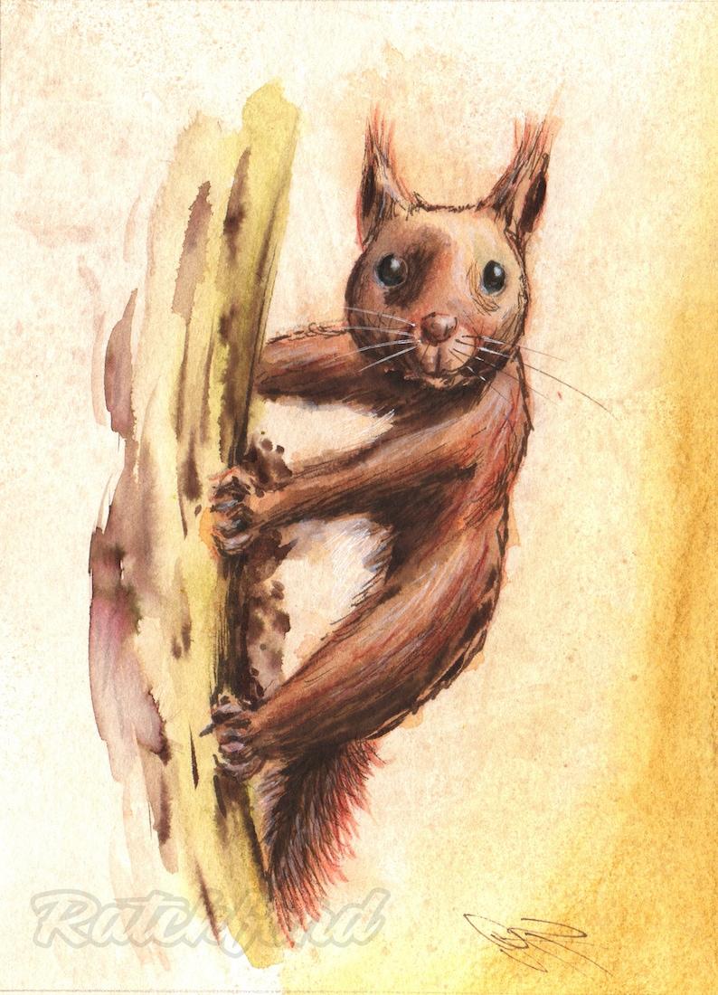 Squirrel image 1