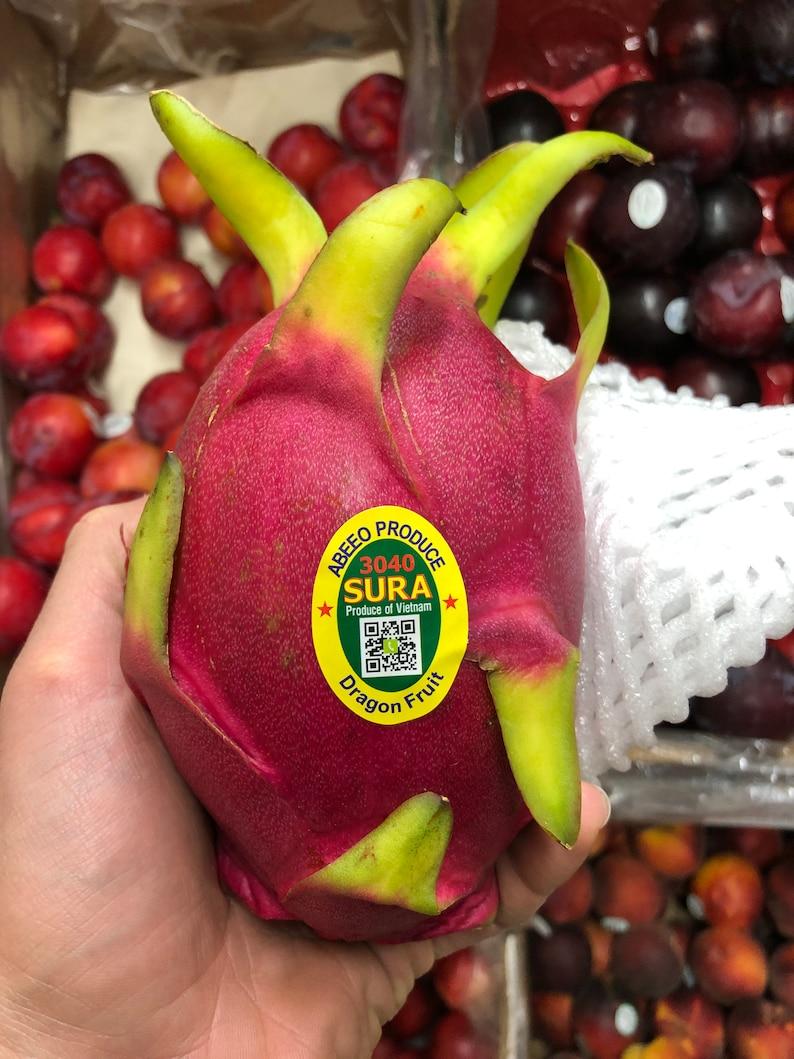 THE ACTUAL FRUIT 6pcs Fresh Red Flesh Dragon Fruit