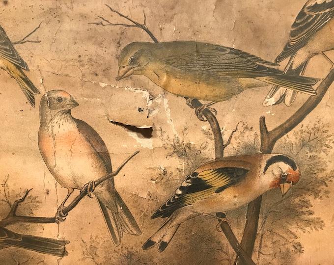 antike Schulwandkarte Vögel Rollkarte 30er
