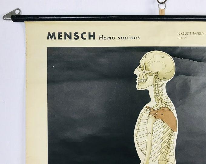 Schulwandkarte HOMO SAPIENS Mensch Skelett