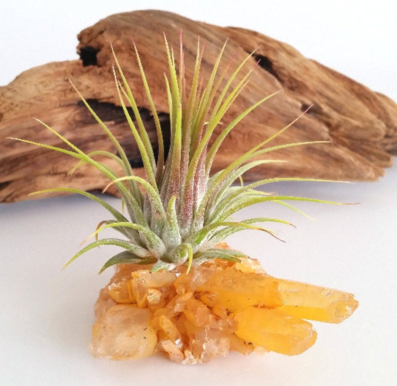 Thank You Gift Friend Gift  Buddy Gift Perfect Gift Tangerine Quartz Rock Hound Gift  Desk Gift Air Plant Gift Crystal Accessories