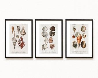 Set of 3 - Animal Seashells Nautical Marine Sea Encyclopedia Vintage Illustrations Prints - for Home Decor Wall Art Poster - A109