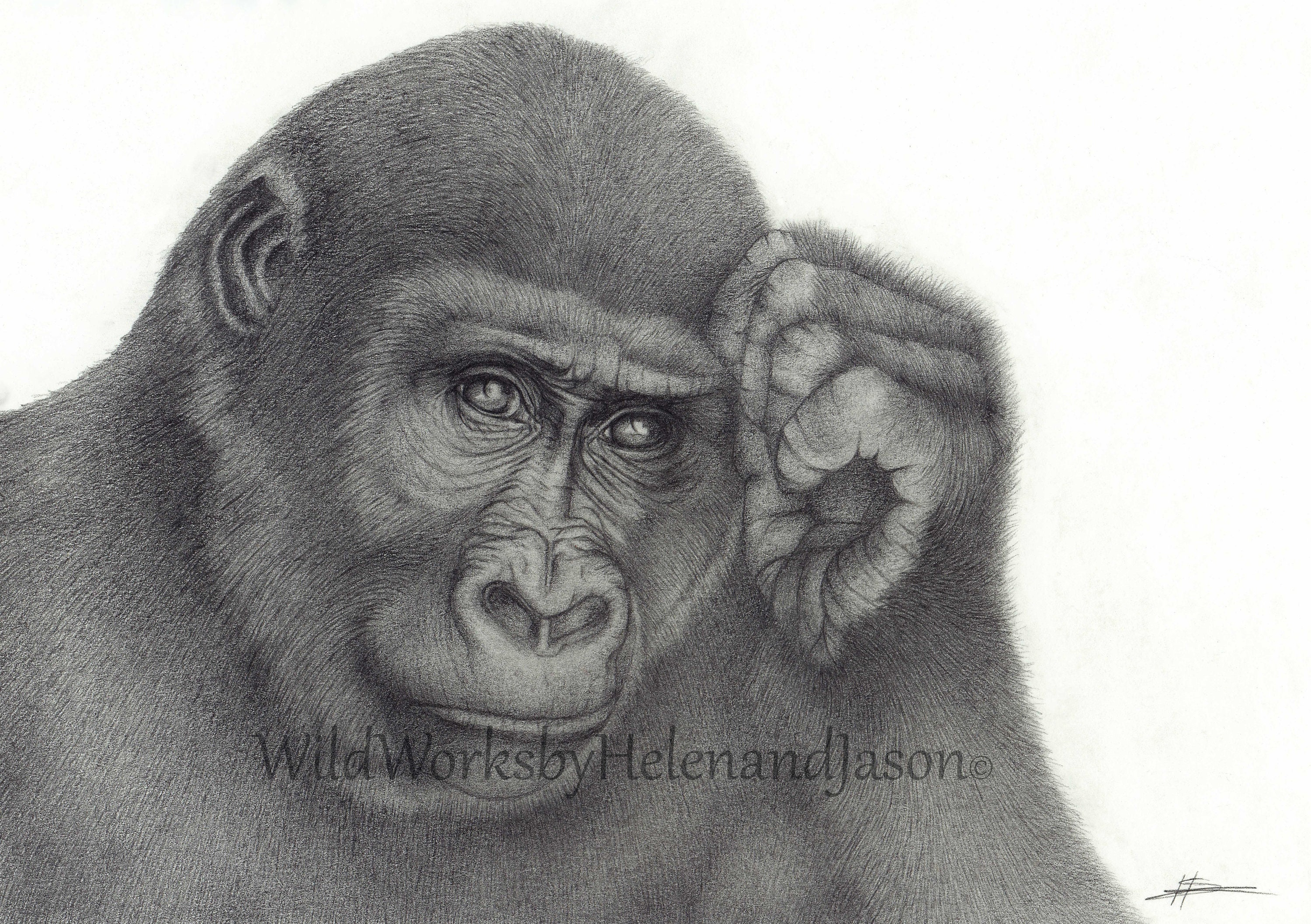 Gorilla print drawing pencil animal wall art wildlife graphite home decoration gift fine art print