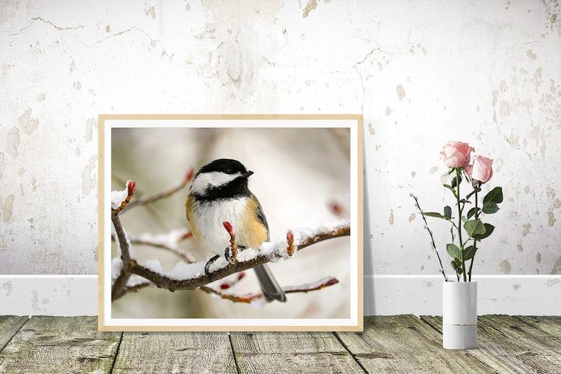 Bird Prints Black-capped Chickadee Photography Wall Art image 1