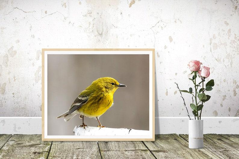 Bird Prints Nature Photography Pine Warbler Photography image 1