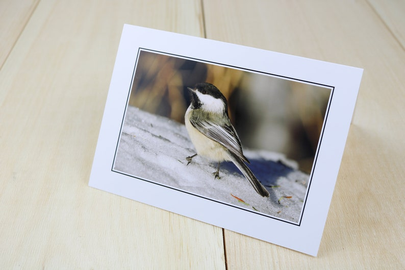 Greeting CardsBlack-capped Chickadees Bird Photography image 0