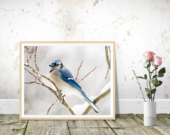 Bird Prints, Blue Jay Photography, Wall Art