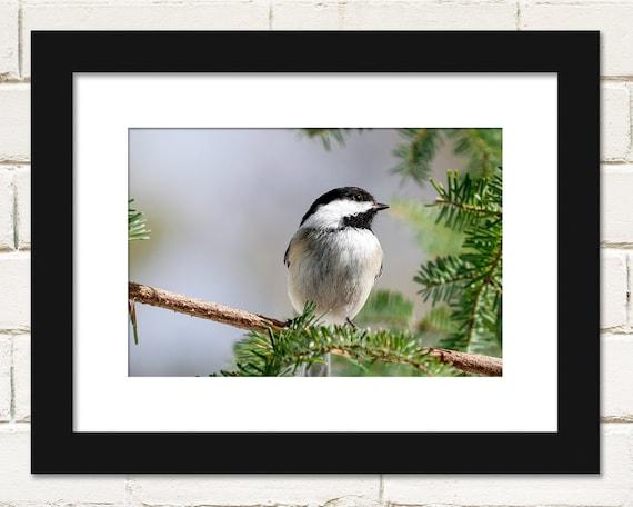 blank Unique /& Beautiful Pine Grosbeak Get Well Birthday Card or any ocassion