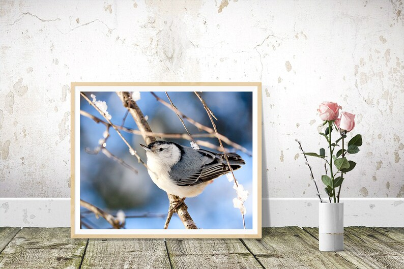White-breasted Nuthatch Photography Wild Bird Nature Print image 0